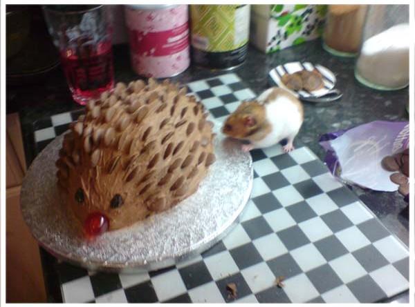 Nibbler:hedgehog
